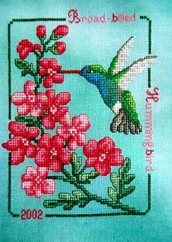 Broad-Billed Hummingbird 2002