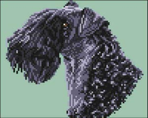 Kerry Blue Terrier (Head)