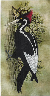 Back From The Brink (Woodpecker)