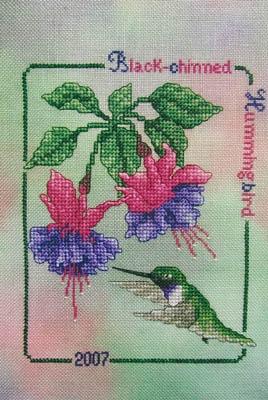 Black Chinned Hummingbird 2007